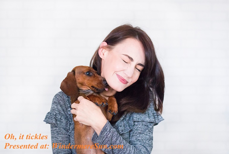 pet of 11-10-2018, oh, it tickles...affection-animal-brunette-1139793 final