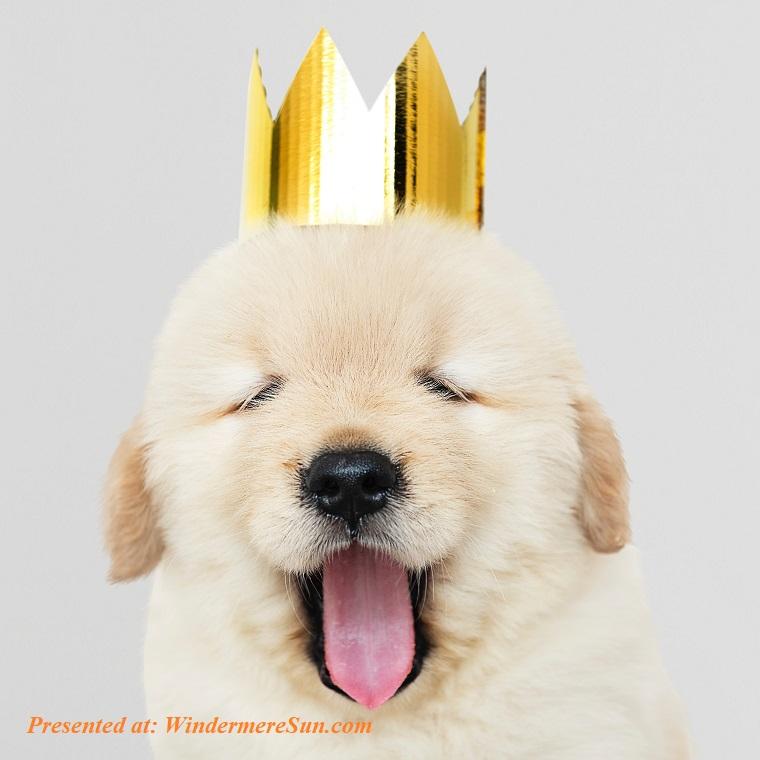 Pet of 1-19-2019, king of the day, dog, adorable-animal-animal-photography-1663421 (1) final