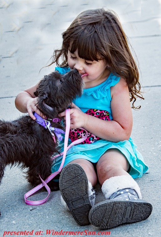 pet of 2-2-2019, girl and her dog, adorable-baby-beautiful-1364756 final