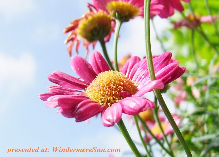 pink bloom-blossom-close-up-54585 final