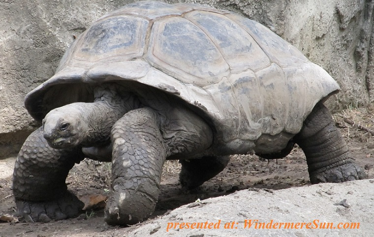 turtle, animal-big-reptile-162307 final
