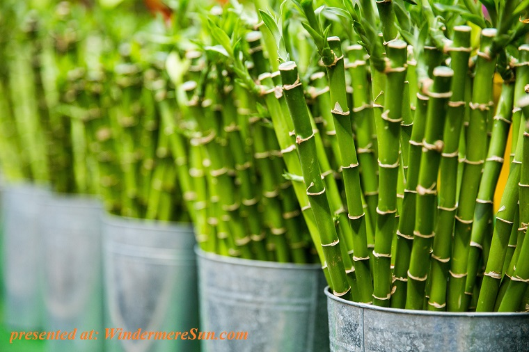 agriculture-bamboo-botanical-405034 final