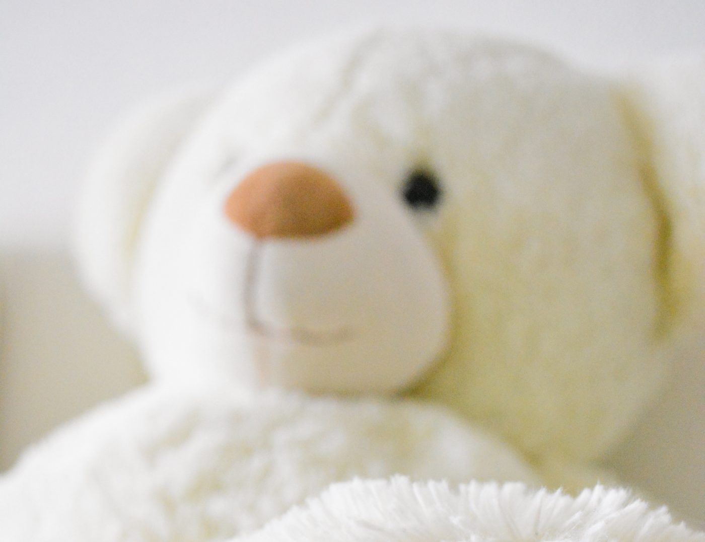 bear-close-up-cuddle-754178 final short