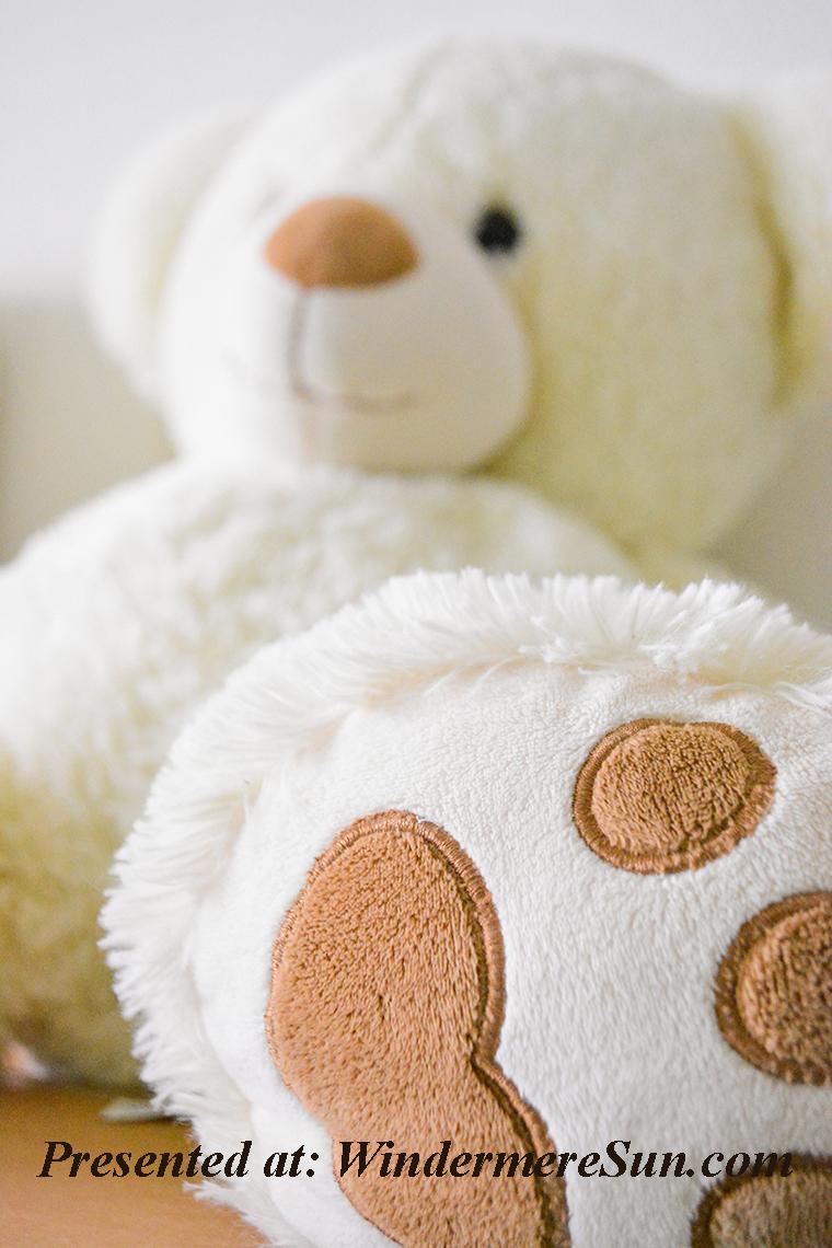bear-close-up-cuddle-754178 final