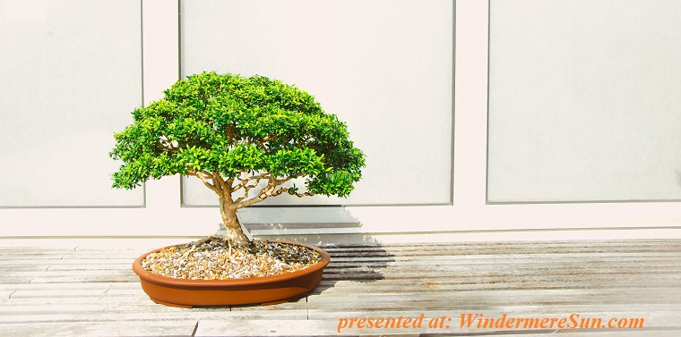 bonsai-decoration-garden-1382195 final