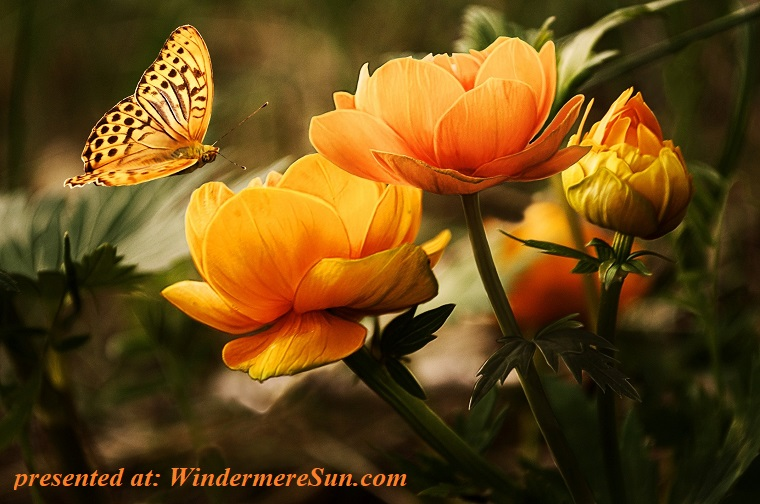 orange flowers with butterfly, bloom-blossoms-buds-87452 final