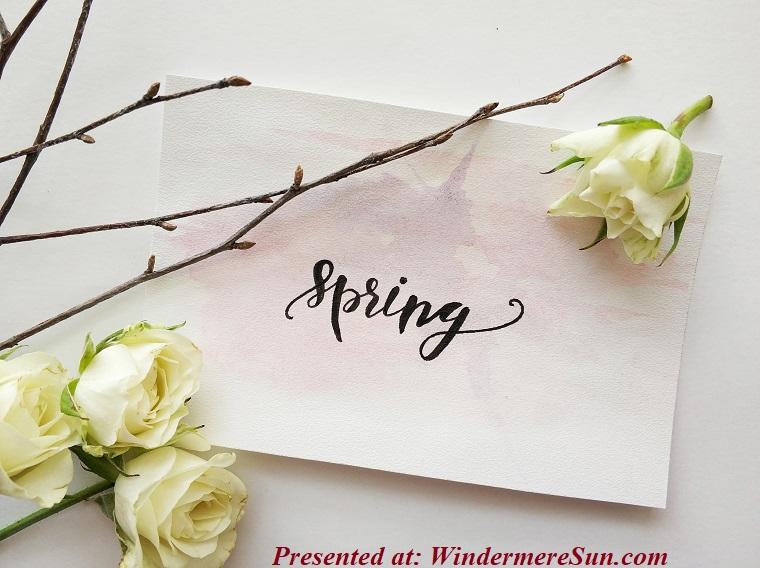 beautiful-bloom-blooming-920154 (1) final