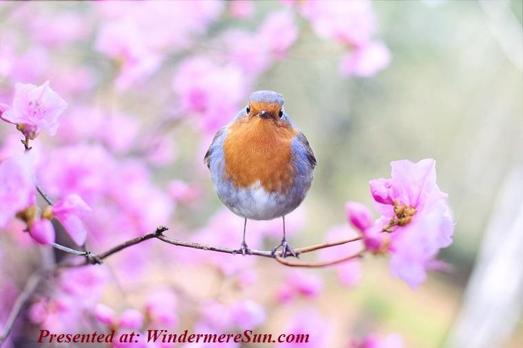 bird chirping, beautiful-bird-bloom-414181 (1) final