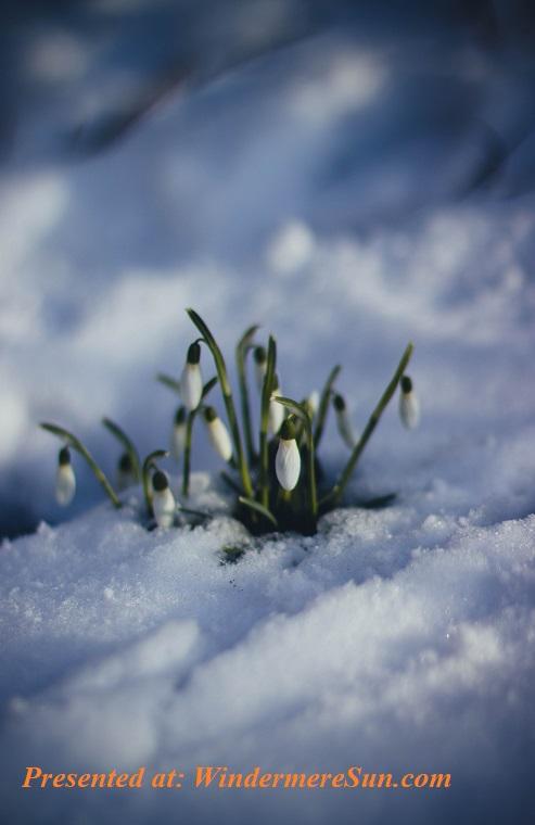 cold-flowers-grass-86580 (1) final