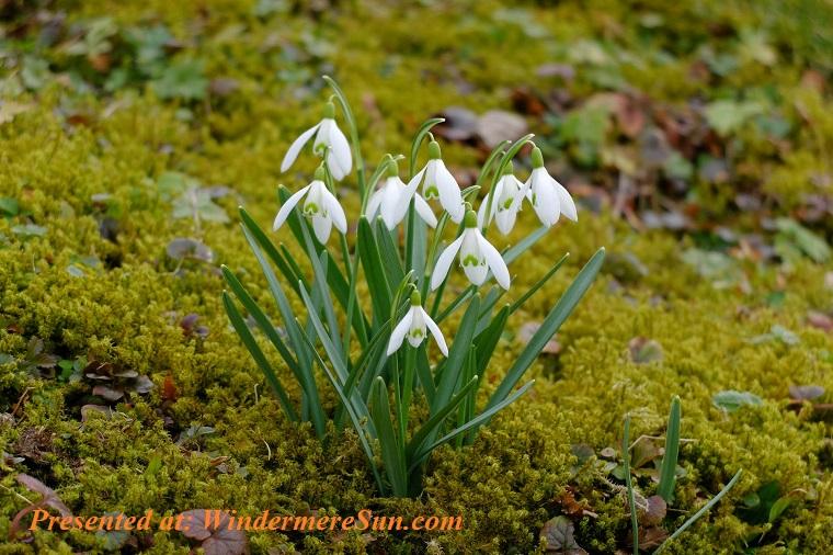 white spring flower, pexels-photo-446811 final