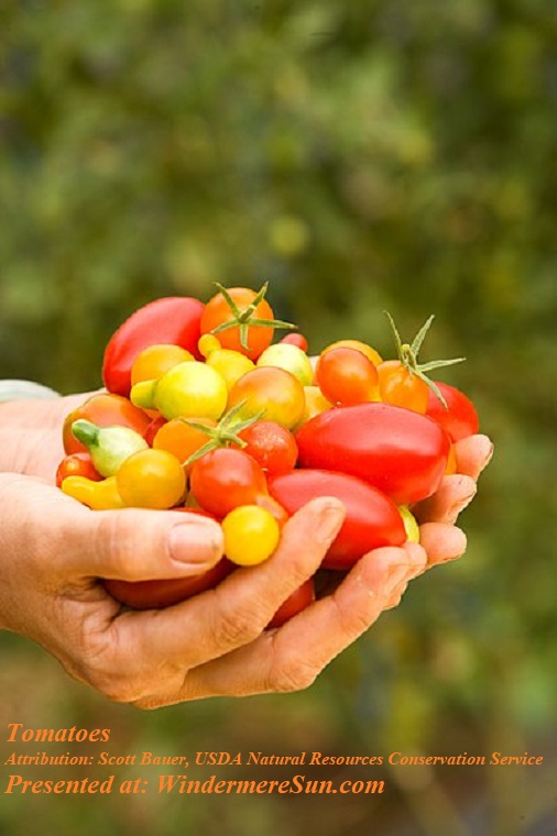Tomatoes in hands, PD, by Scott Bauer, USDA Natural Resources Conservation Service final