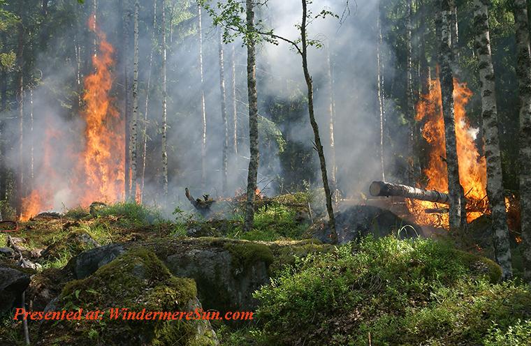 forest fire,burn-burning-fire-51951 final