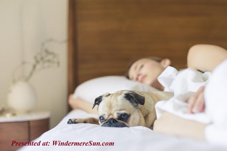 girl sleeping next to her dog, bed-bedroom-cute-545016 final