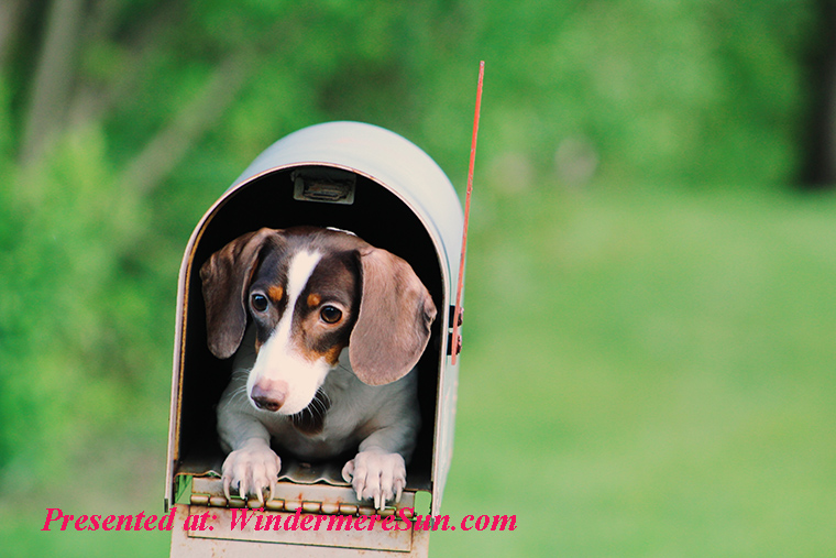 Pet of 11-09-2019, Don't Tell Any One Where I Am Hiding, dog-inside-mailbox final