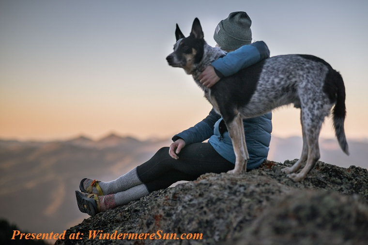 Pet of 11-30-2019, photo-of-person-holding-black-and-white-dog-1452717 final