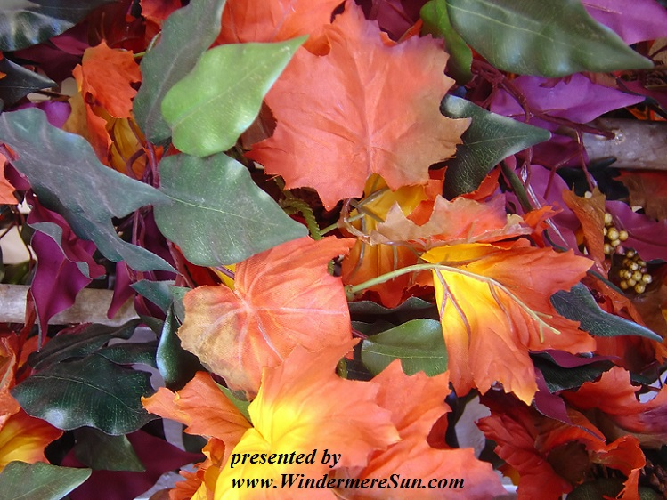autumn-colors-1199146, freeimages, by Keith Syvinski final