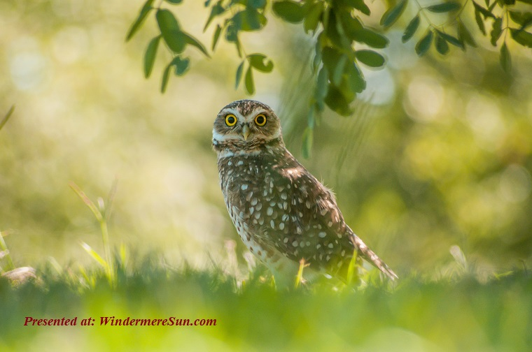 Owl, animal-avian-bird-blurred-background-1149816 (1) final