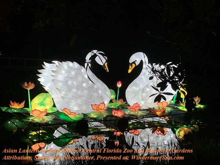 Swans-2 final