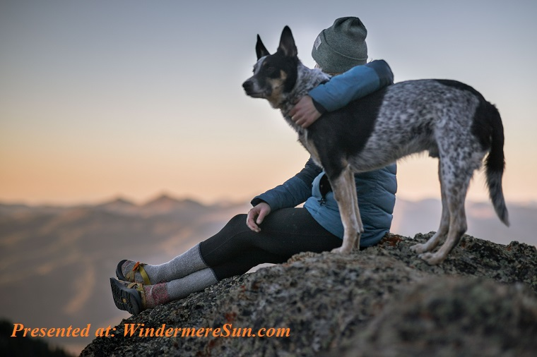Pet of 2-22-2020, photo-of-person-holding-black-and-white-dog-1452717 (1) final