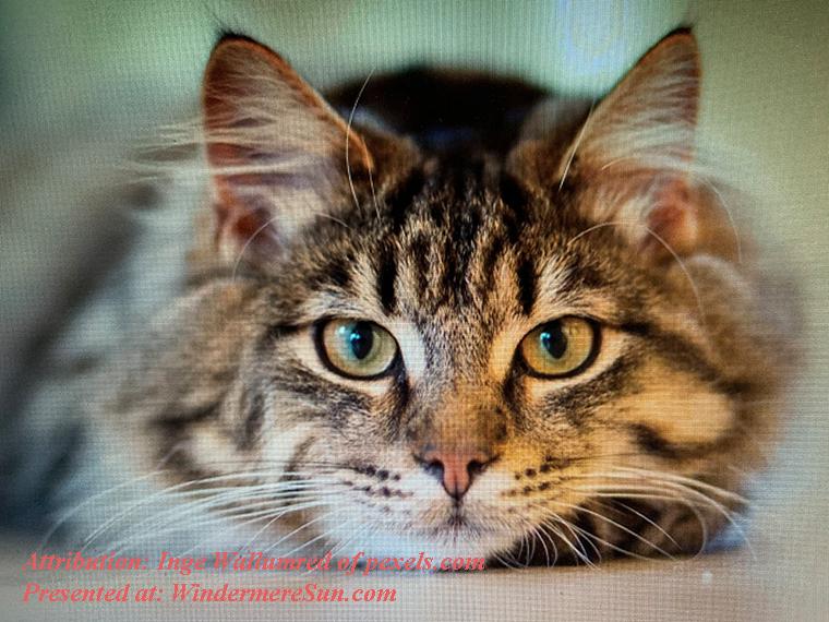 Pet of 4-4-2020, attribution-Inge Wallumred of pexels.com final