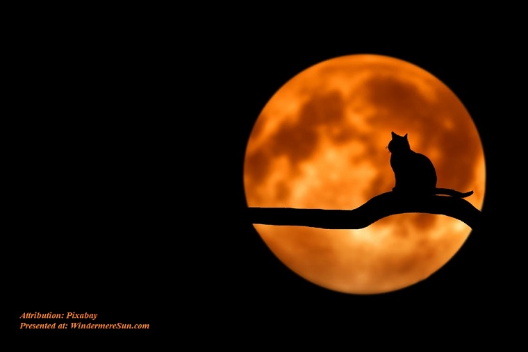 Pet of 5-9-2020, cat on full moon night, amazing-beautiful-breathtaking-clouds final final