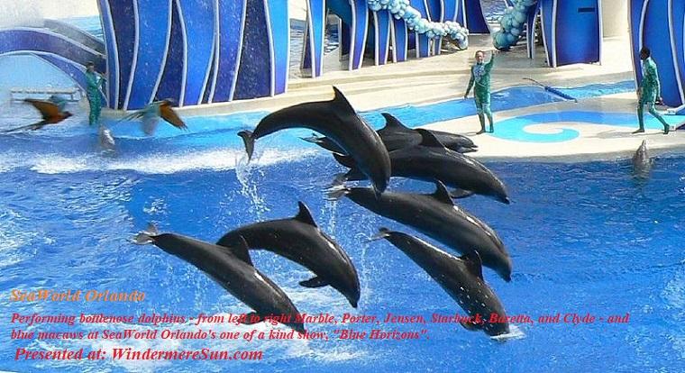 Seaworld Orlando-the show Blue Horizons, attribution-Tim Ross, PD final