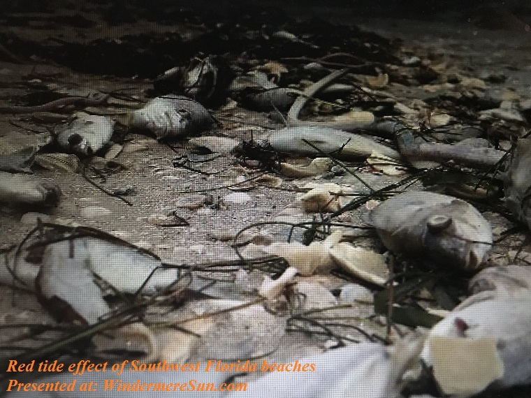 Red tide effects-dead marine life-1 final