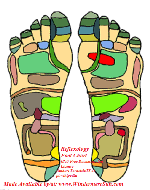 Reflexology Foot_Chart1, demonstrating the areas of the feet that practitioners believe correspond with organs in the zones of the body final.