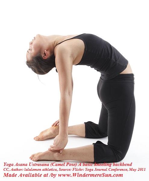Yoga Asana Ustrasana (Camel Pose) A basic kneeling backbend, CC Author Lululemon Athletica final