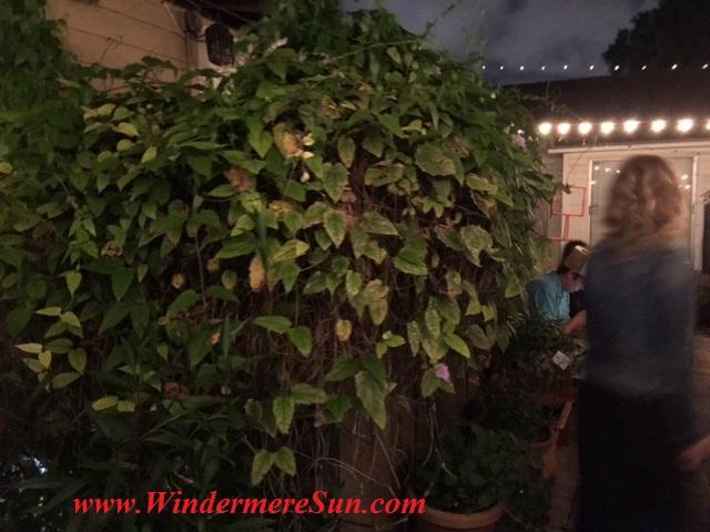 K Restaurant-backyard garden3 final