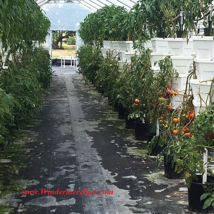 Bekemeyer Hydroponic Farm19 final