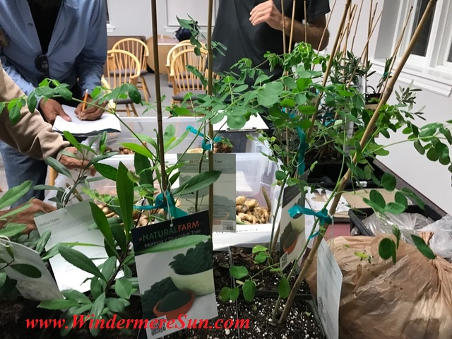 plants2-final