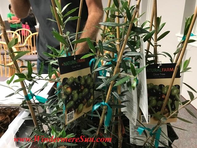 plants4-olive-final