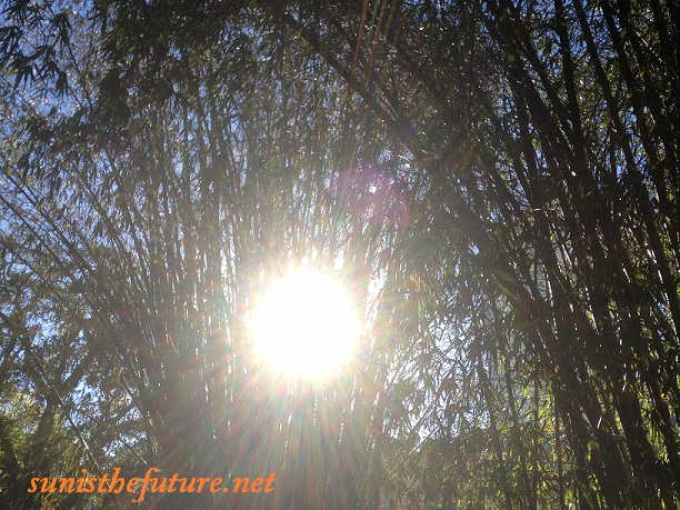 sunshine-through-brisbane-botanic-garden-bamboos-final