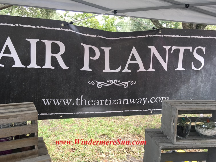 windermere-farmers-market-air-plants-final