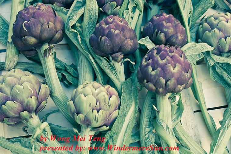 artichokes-2-1317802-freeimages-by-wong-mei-teng-final