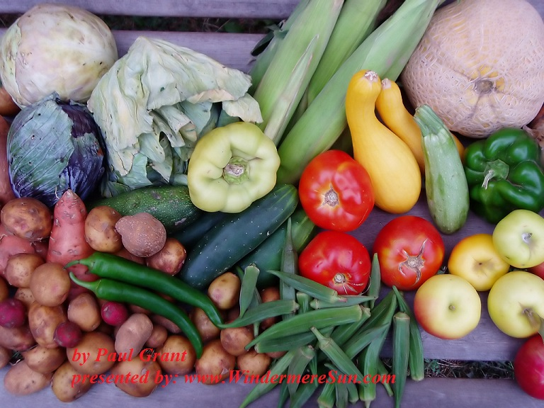 august-vegetables-3-1307007-freeimages-by-paul-grant-final