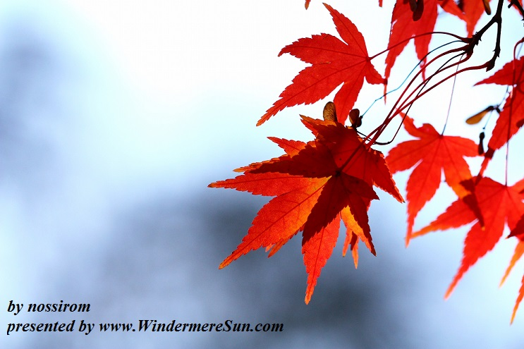 autumn-leaves-1343653-freeimages-by-nossirom-final