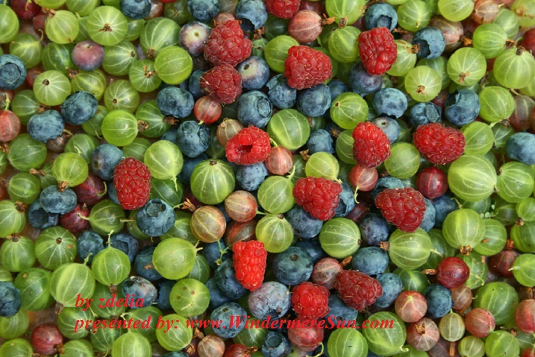 berries-1057537-freeimages-by-zdelia-final