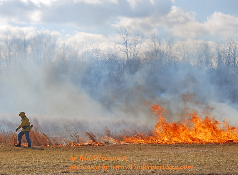 controlled-burn-3-1246286-freeimages-by-bill-silvermintz-final