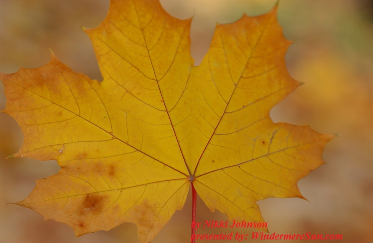 leaf-1186634-freeimages-by-nikki-johnson-final