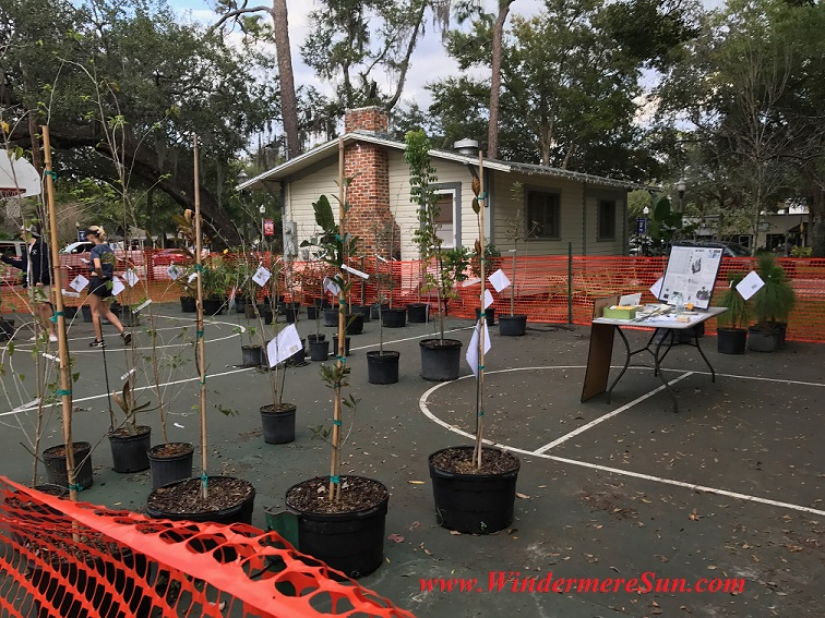 Arbor Day Tree Adoption and Sale 2s final