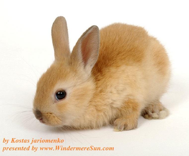 little-red-bunny-1372136, freeimages, by Kostas jariomenko final