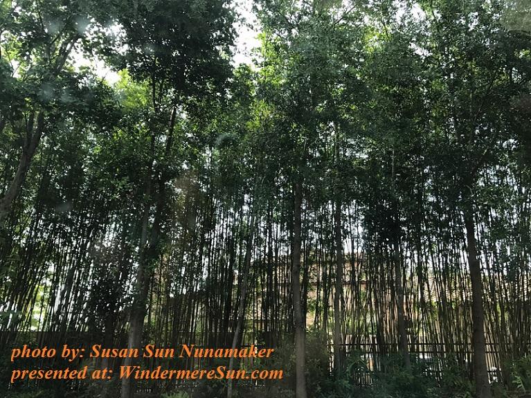bamboos near Butler final