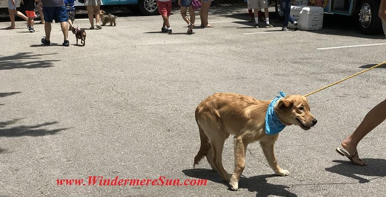 blue scarf dog final