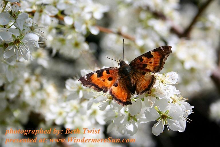 spring-pollinator-1-1376387. by Beth Twist final