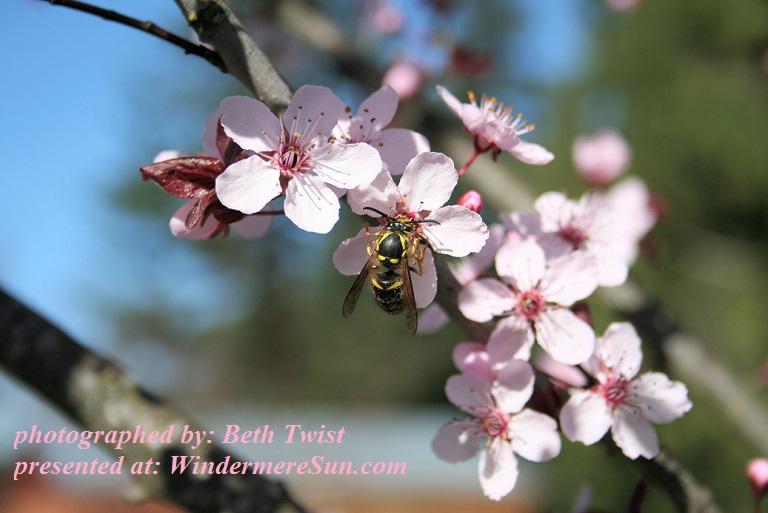 spring-pollinator-2-1376210, by Beth Twist final