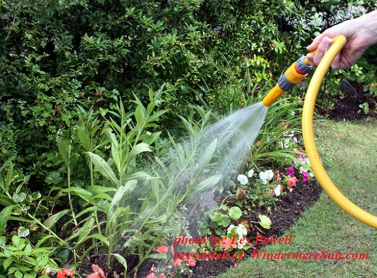 garden-watering-1352684, by Les Powell final