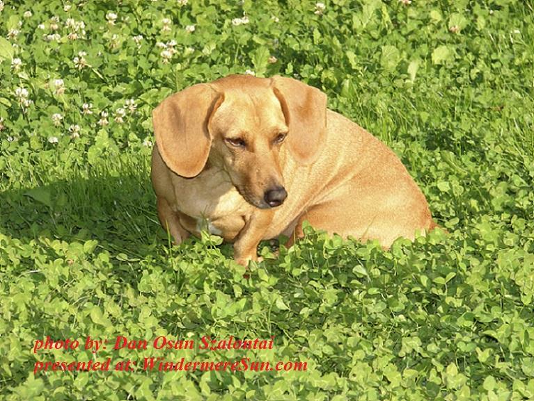 my-dear-dog-1-1358141, by Dan Osan Szalontai final