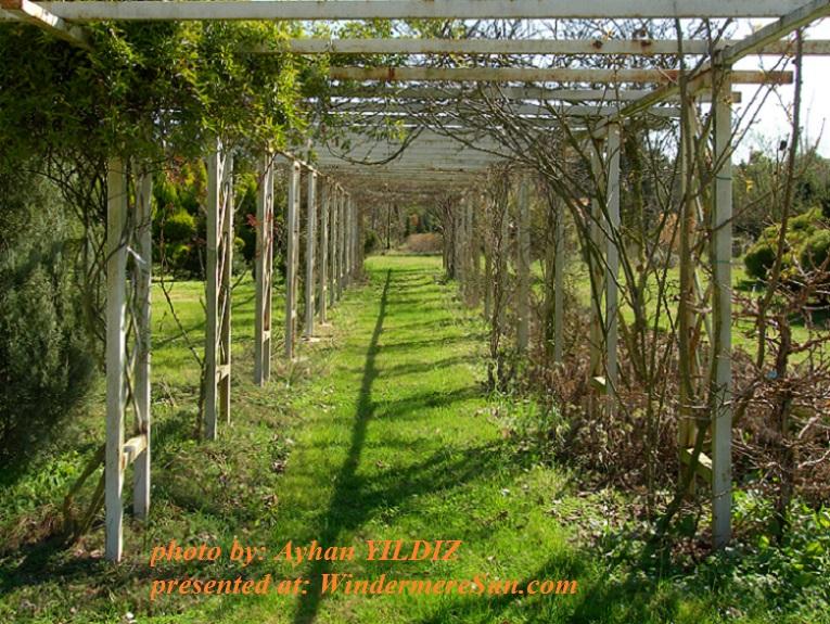 my-garden-1579277, by Ayhan YILDIZ final